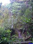 Cascade: Cascade juste après la grotte des Tuves