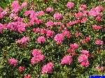 PICT2443: Jolies fleurs...
