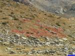 14331: Tapis de fleurs rouges au bord des lacs.