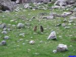 Marmottes: