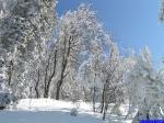 : Forêt au Nord d'Autrans.