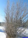 PICT0369: Un arbre givré.